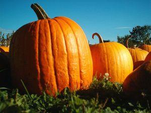 A potential vampire pumpkin